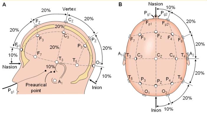 cortex nfb